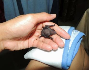 Micro Bats