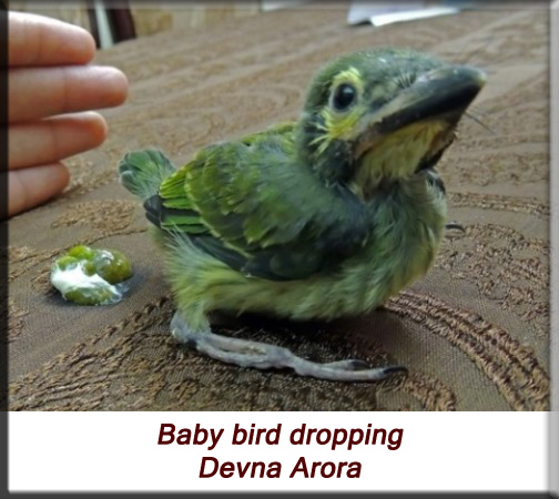 Devna Arora - Baby bird droppings