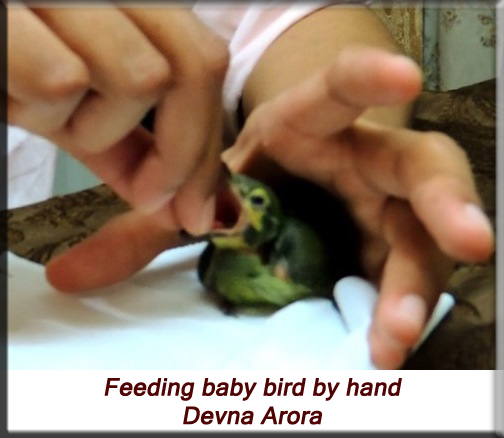 Devna Arora - Feeding baby bird by hand