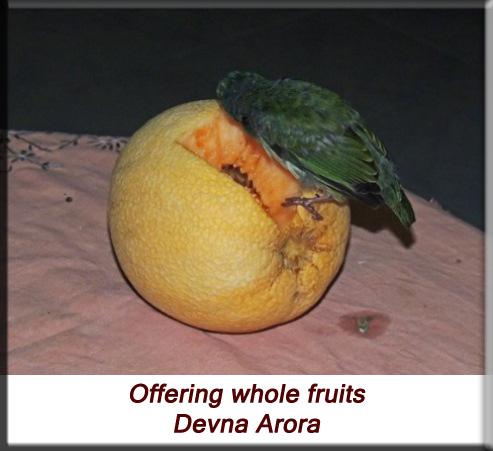 Devna Arora - Offering whole fruits