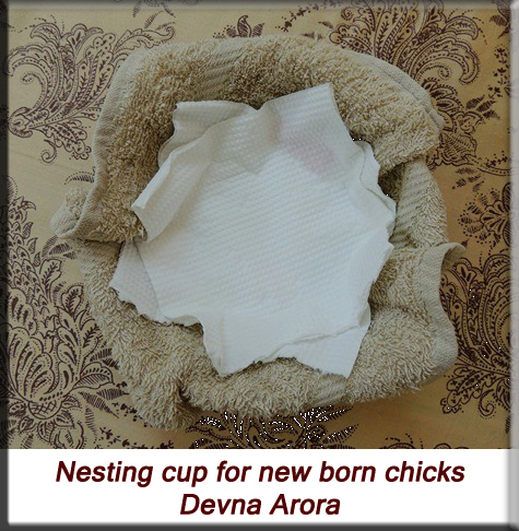 Devna Arora - Nesting cup for nestlings