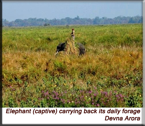 Devna Arora - Elephant carrying back its daily forage