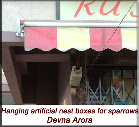 Devna Arora - Hanging artificial nest boxes for house sparrows