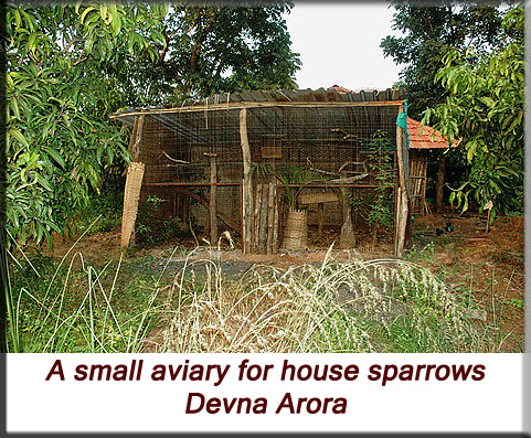 Devna Arora - Small aviary for house sparrows