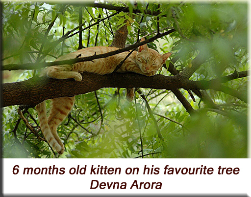 Devna Arora - Kitten on his favourite tree