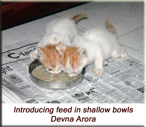 Devna Arora - Introducing feed in shallow bowls