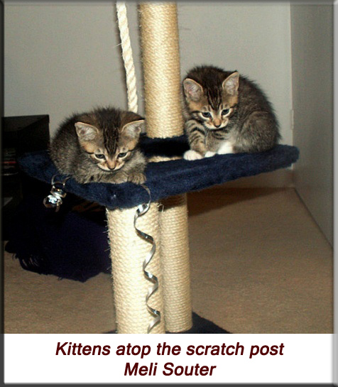 Meli Souter - Kittens atop the scratch post