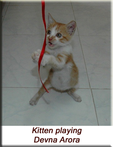 Devna Arora - Kitten playing