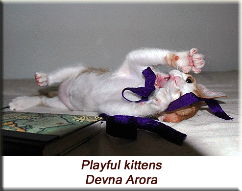 Devna Arora - Playful kittens