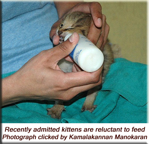 Devna Arora - Recently admitted kittens are reluctant to feed