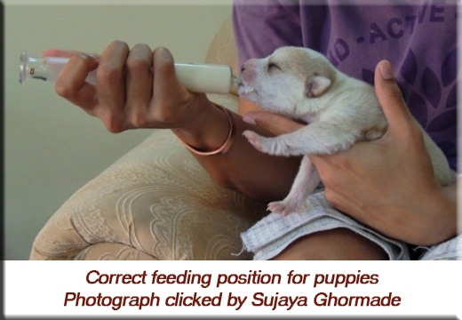 Devna Arora - Correct feeding position for puppies