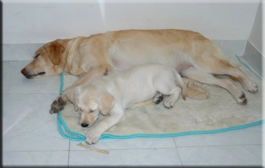 Devna Arora - Cross fostering puppies