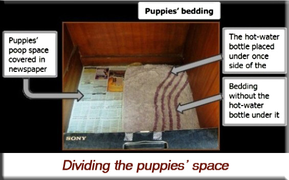 Devna Arora - Dividing the puppies' space