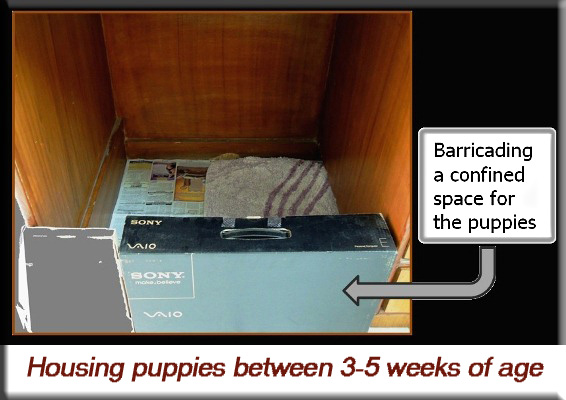 Devna Arora - Housing puppies between 3-5 weeks of age