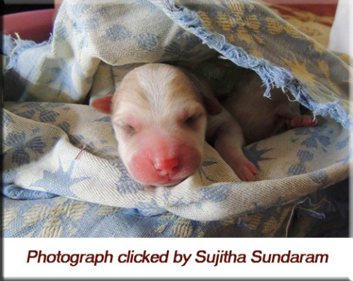 Devna Arora - New Born Puppy