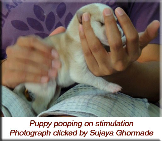 Devna Arora - Puppy pooping on stimulation