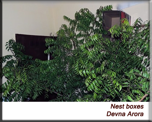 Devna Arora - Open nest box