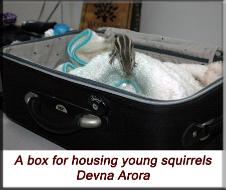 Devna Arora - Indian palm squirrel - Box for housing the young