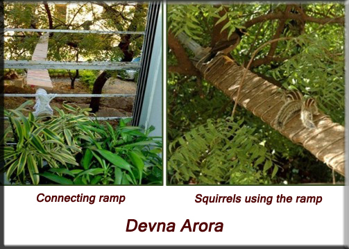 Devna Arora - Indian palm squirrel - allowing access