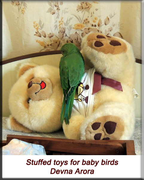Devna Arora - Parakeet chicks - Stuffed toys for orphaned baby birds