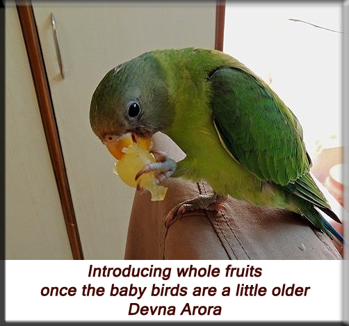 Devna Arora - Introducing whole fruits for young birds