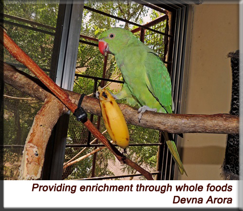 Devna Arora - Providing enrichment through whole foods