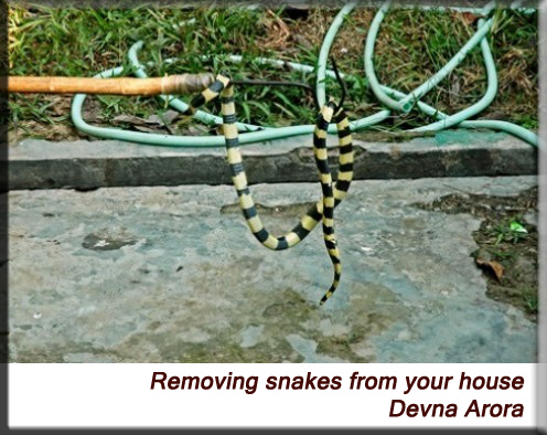 Devna Arora - Removing snakes from your house
