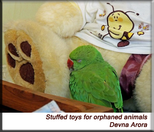 Devna Arora - Stuffed toys for wildlife orphans